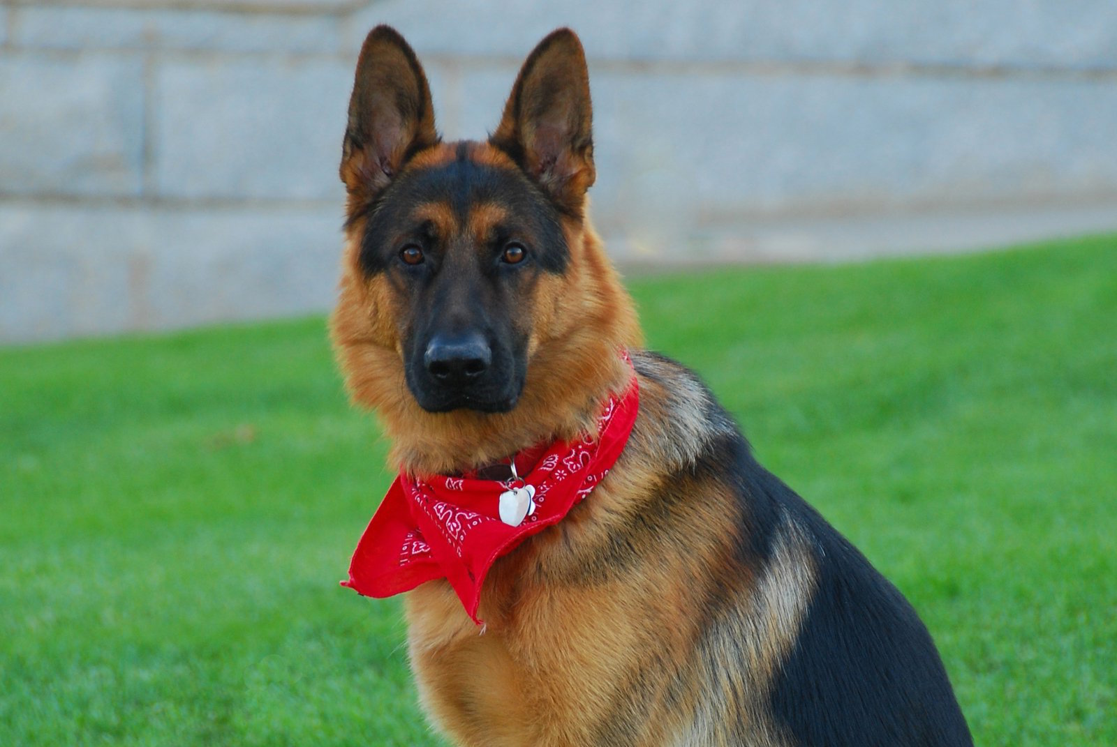 Aggressive Dog Training Nashville | Nashville Aggressive Dog